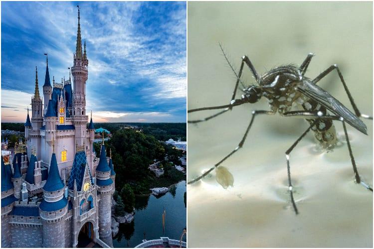 Disney World Mosquitos