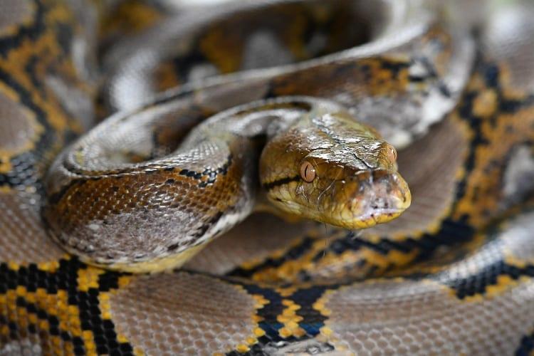 Snake In Theme Park