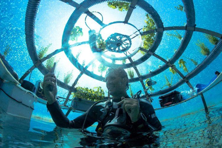 Underwater Vegetable Garden
