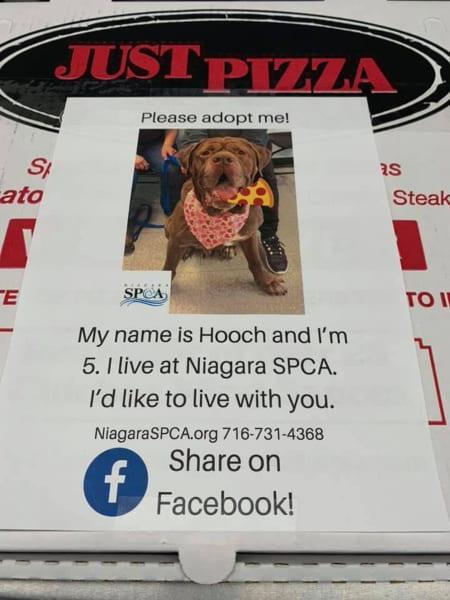 Mary Alloy Niagara SPCA