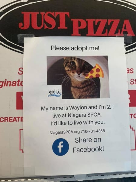 Adoptable Dogs on Pizza Boxes